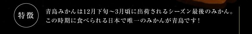 三ヶ日青島みかんの特徴2
