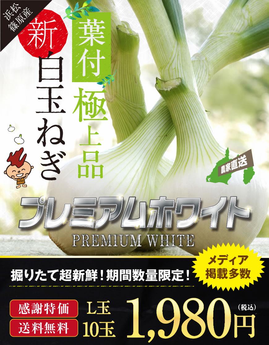 葉付白玉ねぎ 浜松篠原産プレミアムホワイト