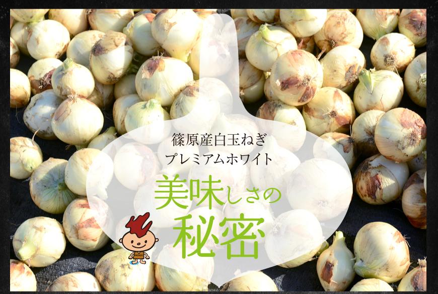 浜松篠原産白玉ねぎ美味しさの秘密
