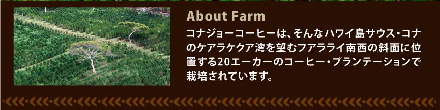 コナジョーコーヒー農園写真