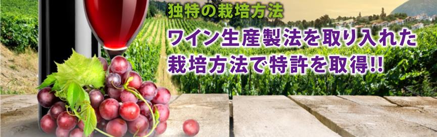 特許取得のワイン生産製法