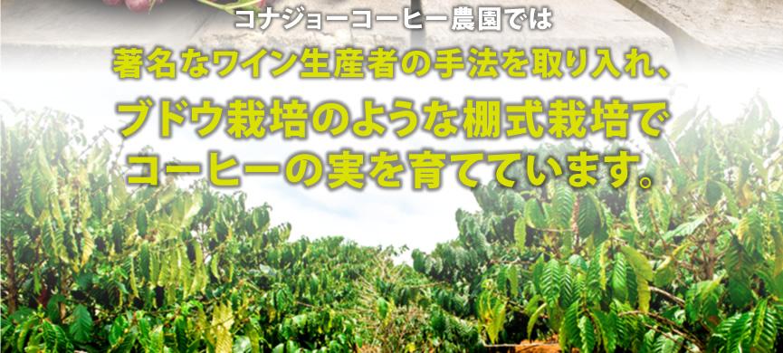 ブドウ栽培のような棚式栽培