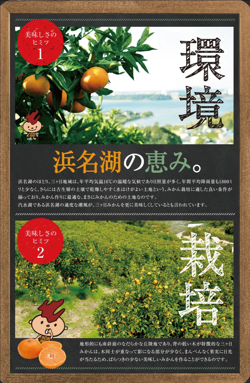 清美オレンジおいしさのひみつ