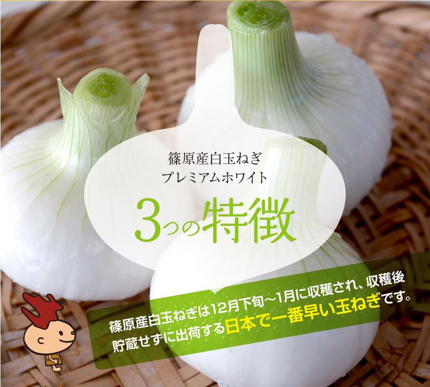 浜松篠原産プレミアムホワイト・日本で一番早い玉ねぎ