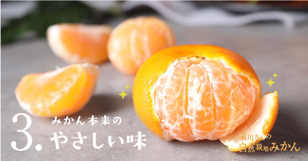 堀川さんの無農薬みかん おいしさのポイント3 みかん本来のやさしい味