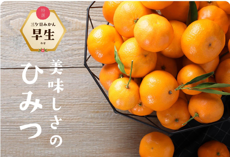 """""""特選三ケ日みかん早生(わせ)"""