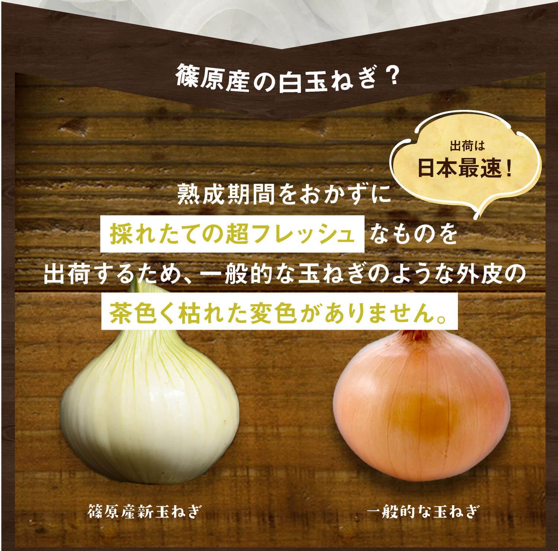 篠原産の白玉ねぎ?熟成期間をおかずに採れたての超フレッシュなものを出荷するために、一般的な玉ねぎのような外皮の茶色く枯れた変色がありません。