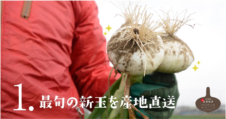 新玉ねぎ やみつきになる特徴1 最旬の新玉を産地直送